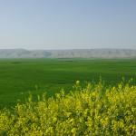 La piana di Navkur durante la primavera